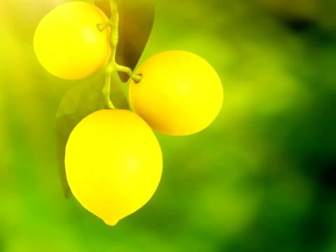 ramo di limoni - parte della pianta video stock e b–roll