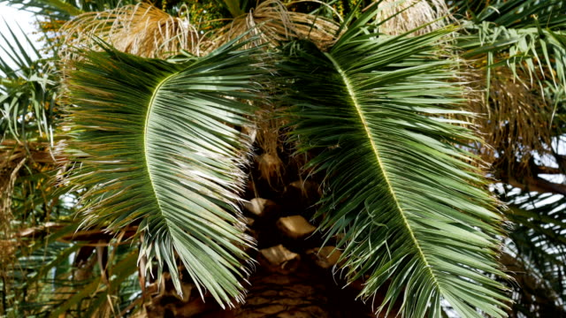 branch of palm trees swaying in the wind in Sunny Montenegro video