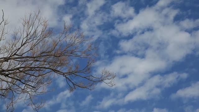 Branch video