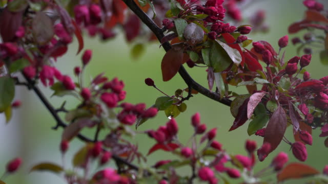 branch with pink flowers gently moving in the breeze