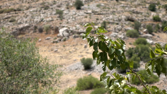 Branches Blowing in Wind in Mountains in Israel video