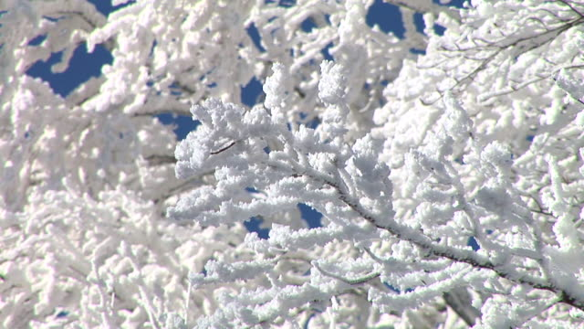 HD: Branches covered in snow. video