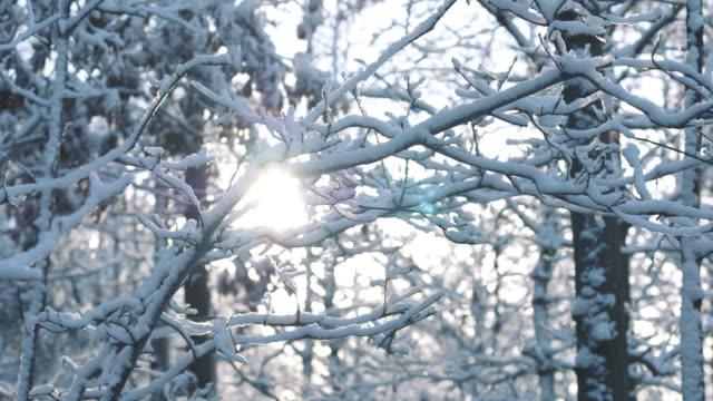 grenar som täcks av snö - swedish nature bildbanksvideor och videomaterial från bakom kulisserna