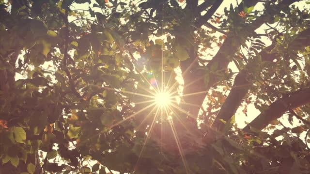 Branches in wind with glitter Sun flare video