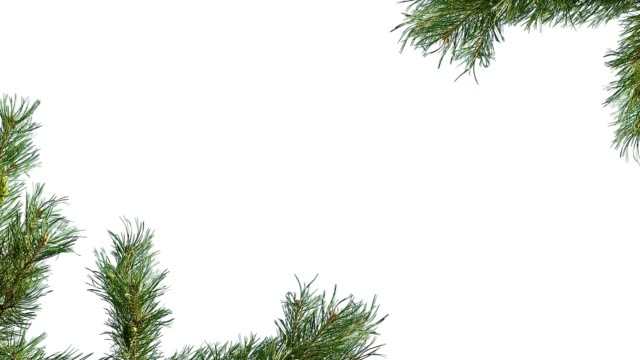 vídeos de stock e filmes b-roll de branches of a coniferous tree on the edges of the screen on a white isolated background - christmas tree