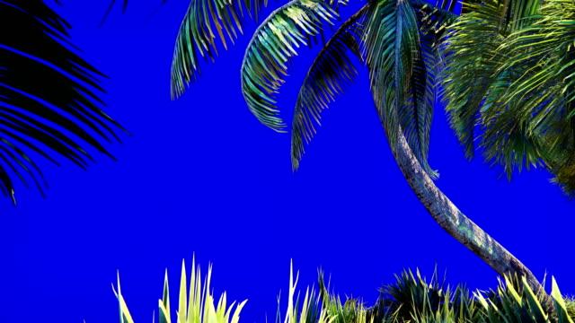 vidéos et rushes de branches d'un palmier et une plante tropicale dans le vent sur un écran bleu. beau fond en boucle d'été. - arbre tropical