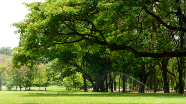 Branches of Big Trees in Green Park video