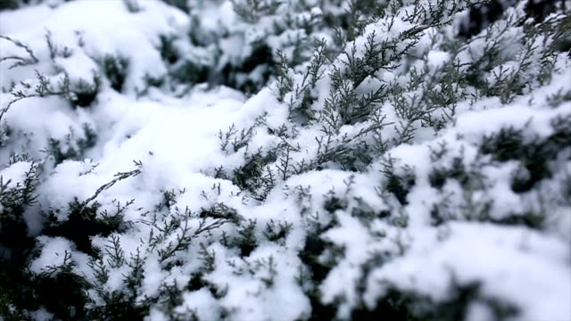 Branches of fir tree in the snow video