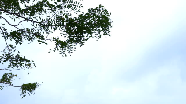 Branches of Green Leaves against blue sky at cloudy day, slow motion shot video