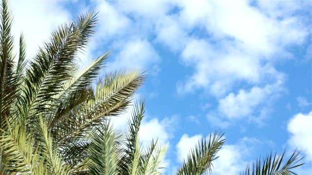 Branches of palm trees against the sky.