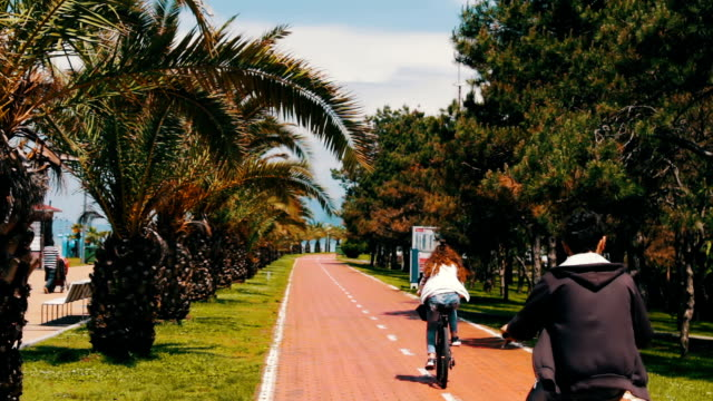 Branches of palm trees that grow on the embankment of the Georgian city of Batumi. Bike paths on the embankment of resort city where cyclists ride video