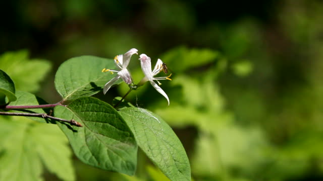 Branches of Wild berry flowers video