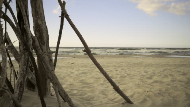 grenar träd på stranden 4k - 4 kilometer bildbanksvideor och videomaterial från bakom kulisserna