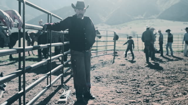 branding cattle in utah - irriducibilità video stock e b–roll