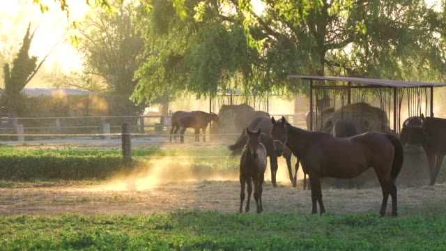 breathtaking shot of young horses grazing in their stable on a beautiful morning - cavalla video stock e b–roll