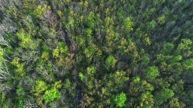 Breathtaking vista on spring forest video