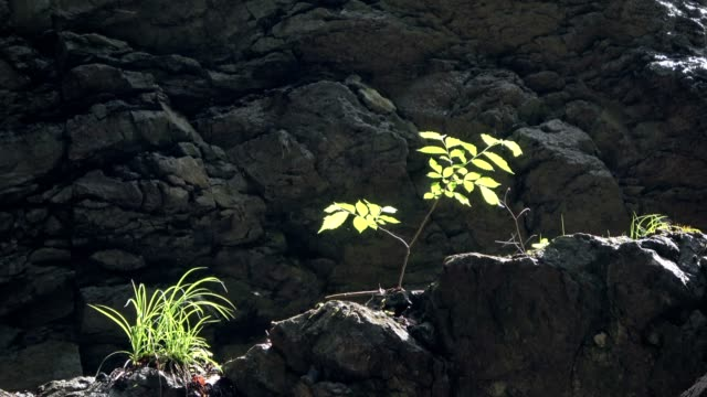 breitachklamm, canyon, erosion, kontrast, växtligheten, mångfald, allgäu, bayern, tourismus, mirakel av naturen, 4k - kontrastrik bildbanksvideor och videomaterial från bakom kulisserna