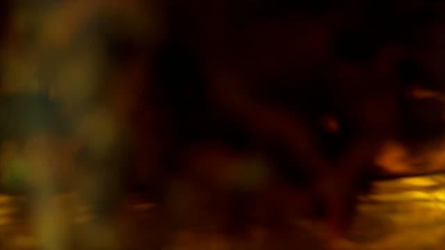 vídeos de stock, filmes e b-roll de infusão de chá preto em close-up chaleira transparente. flores exóticas de chá verde num copo de vidro, parte superior fechar vista. infusão de chá preto em um close-up do jarro de vidro. tiro macro do processo de fabricação de cerveja chá de ervas em um bule transparente de vidro - tea drinks