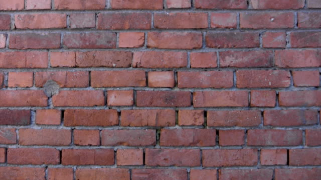 Brick Wall Background, Zoom Effect video