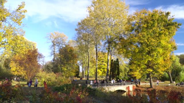 Bridge in autumn park video