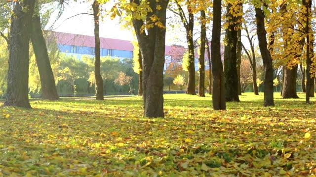 Bright  autumn  forest video