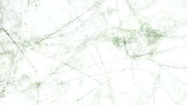 erratc - translucid の葉: 明るい、黒背景 (遷移) - 異国情緒点の映像素材/bロール