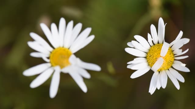 Bright flora Wildflowers plant part stock videos & royalty-free footage