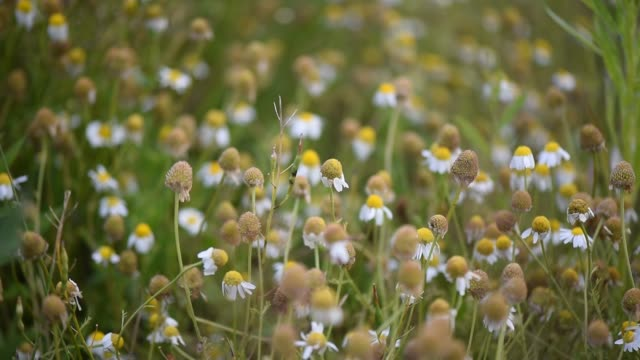 stockvideo's en b-roll-footage met heldere flora - plantdeel