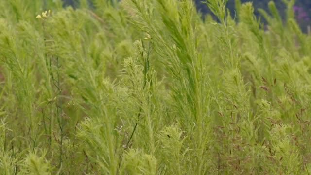 Bright flora Bright flora plant part stock videos & royalty-free footage