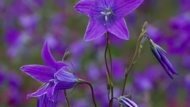 vídeos de stock, filmes e b-roll de sino de flor brilhante - flor temperada
