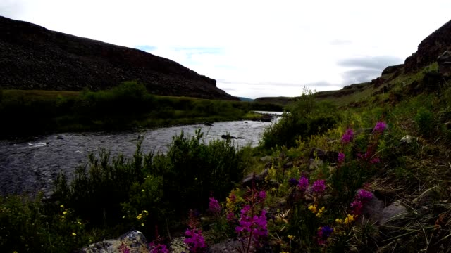 Bright Flowers on The Banks of The Fast mountainous river canyon panorama from left to right video