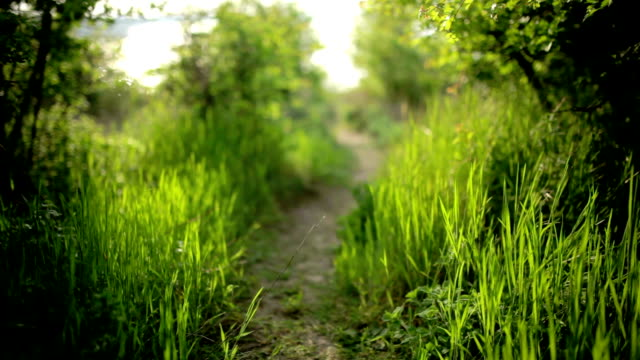 Bright glade with wild flowers, grass and dew video