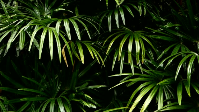 vídeos de stock e filmes b-roll de bright juicy exotic tropical greens in the jungle forest equatorial climate. background with unusual plant foliage swaying. natural texture with juicy leaves. sunlight on the palm leaf. - leaf