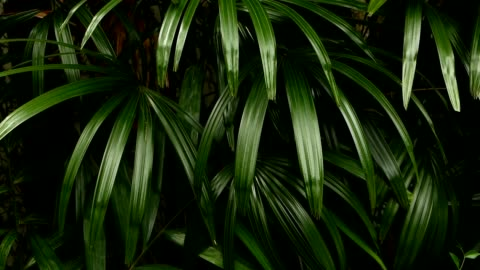 vídeos de stock e filmes b-roll de bright juicy exotic tropical greens in the jungle forest equatorial climate. background with unusual plant foliage swaying. natural texture with juicy leaves. sunlight on the palm leaf. - folha