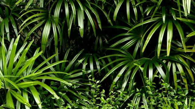 hellen saftigen exotischen tropischen grüns in den dschungel wald äquatorialklima. hintergrund mit ungewöhnlichen pflanze laub schwankend. natürliche textur mit saftigen blättern. sonnenlicht auf den palmblättern. - gedeihend stock-videos und b-roll-filmmaterial