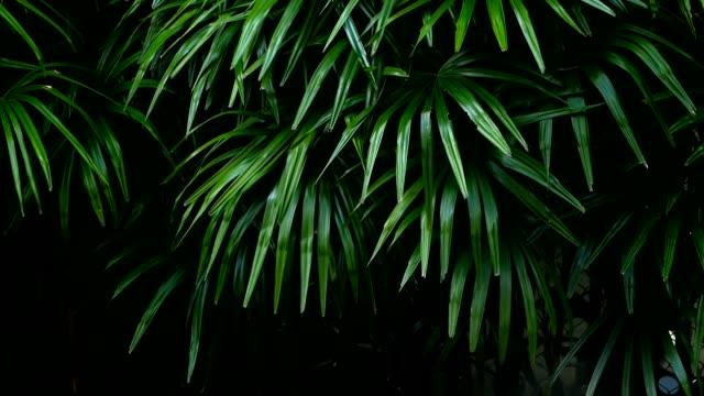 ジャングルの森の赤道気候で明るいジューシーなエキゾチックなトロピカル グリーン - 春のファッション点の映像素材/bロール