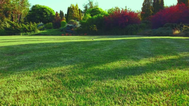 bright lawn. juicy green grass, creative trees, garden with landscaping. - gardino video stock e b–roll