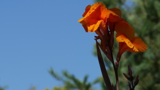 Bright orange flowers in the wind video