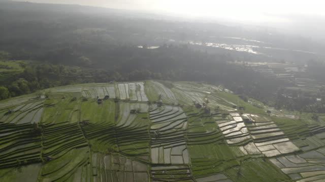 明亮的天空和鬱鬱蔥蔥的綠色水稻梯田被綠色植物包圍。 - 東南 個影片檔及 b 捲影像