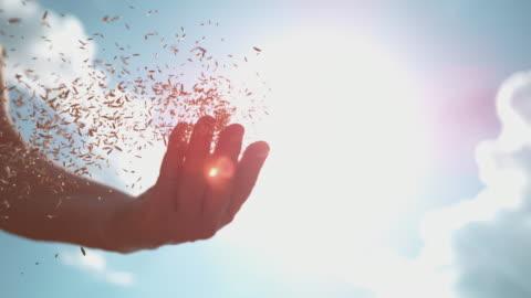 vidéos et rushes de lens flare : des rayons de soleil d'été lumineux brillent sur les graines de blé dispersées à la main d'un fermier - graine