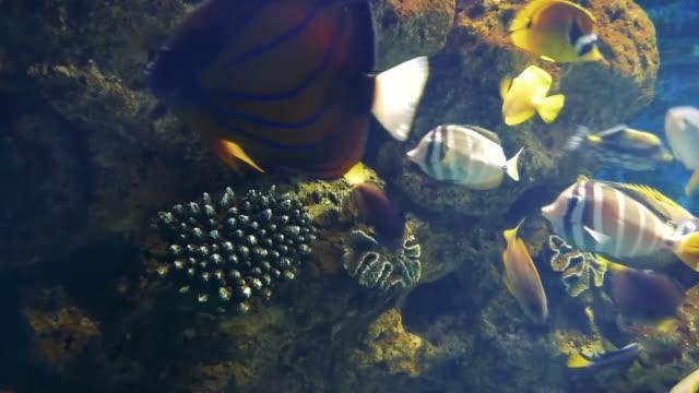parlak tropik balıklar mercanlar arasında saf suda yüzer - i̇htiyoloji stok videoları ve detay görüntü çekimi