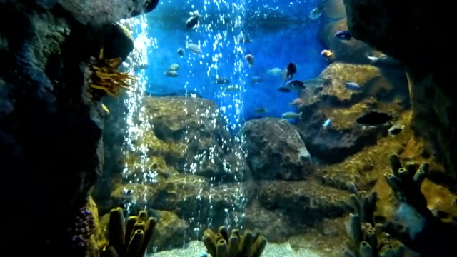 Bright tropical fishes swims in pure water among corals Bright tropical fishes swims in pure water among corals. Many colored underwater inhabitants moving in different directions. Lot of oxygen bubbles rises at the back. zoology stock videos & royalty-free footage