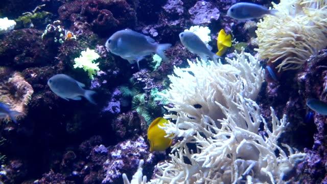 hellen tropischen fische schwimmen in reinem wasser unter korallen - ichthyologie stock-videos und b-roll-filmmaterial