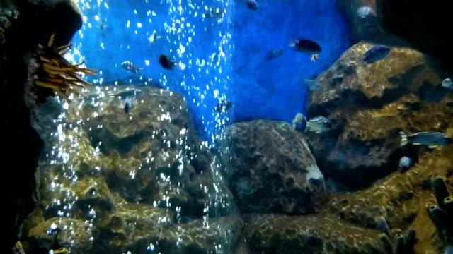 hellen tropischen fische schwimmen in reinem wasser - ichthyologie stock-videos und b-roll-filmmaterial