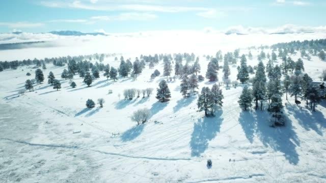 stockvideo's en b-roll-footage met briljante namiddag licht boven bomen met mist - sneeuwkap
