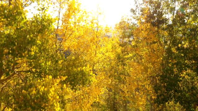 vídeos de stock, filmes e b-roll de luz solar brilhante que estouram através de aspens em colorado - condado de pitkin