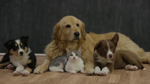 Bring Home a New Pet