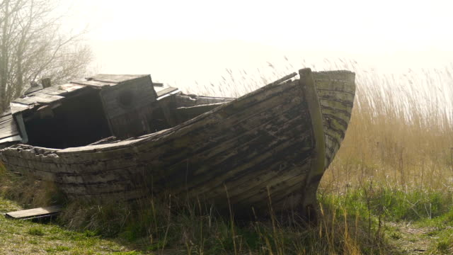a broken abandoned boat on the side of the river - orticoltura video stock e b–roll