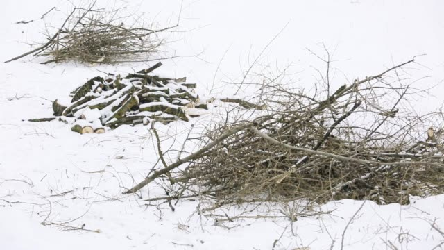 Broken branches from a dry deciduous tree lie on on snow-covered ground in the forest video