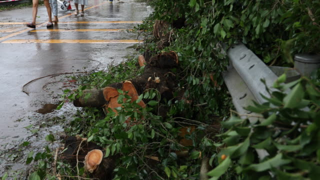 broken tree fall down block the road,damages after super typhoon mangkhut in china - 16 sep 2018 - ruined stock videos & royalty-free footage